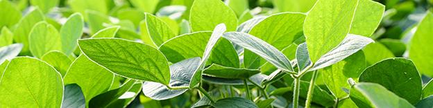02-15-soybean-header