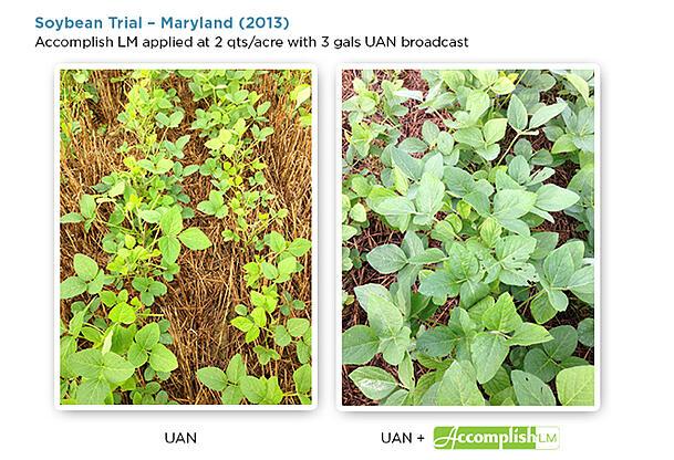 02-15-soybean-blog-04