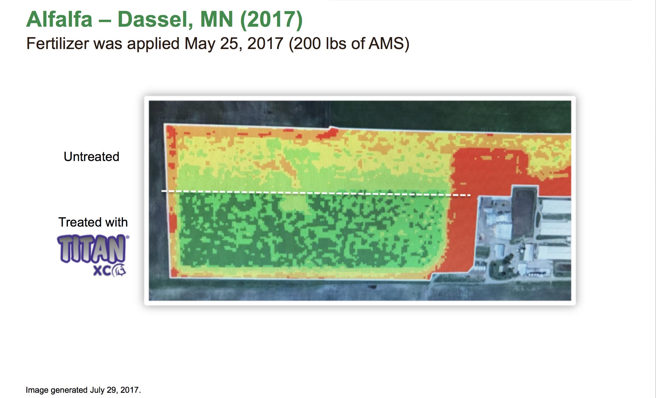 Alfalfa – Dassel MN