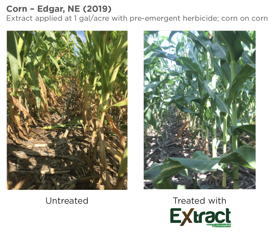 Extract Corn – Edgar NE