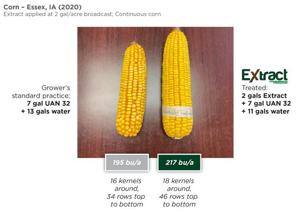 Extract Corn Ears Iowa