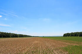 Fallow soil 1