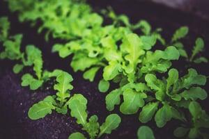 botanical-biologicals-biostimulants