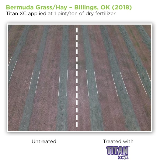 bermuda-grass-OK-2