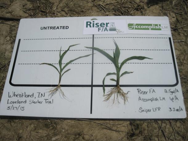 corn_wheatland_IN-2