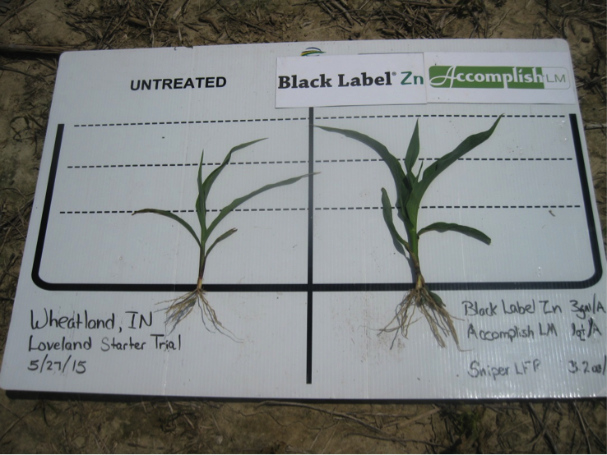 corn_wheatland_IN-3