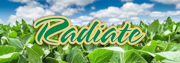 radiate_header