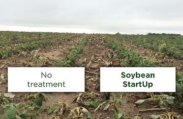 soybean_startup_2
