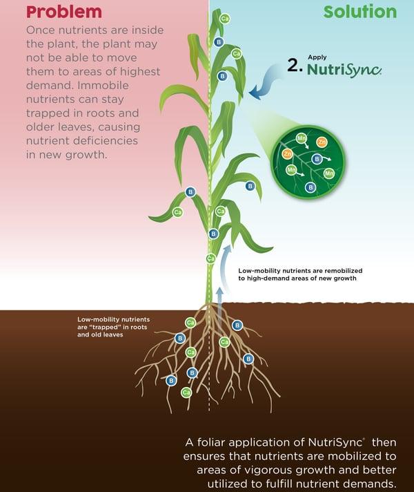 foliar-technologies-nutrisync