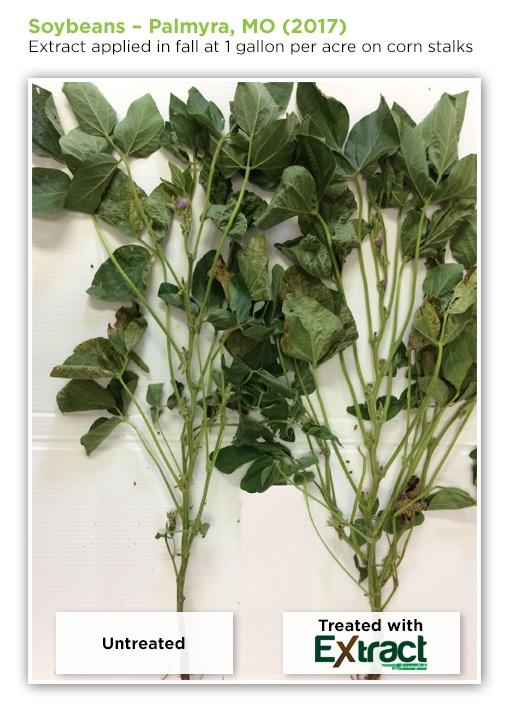 soybeans-3.jpg